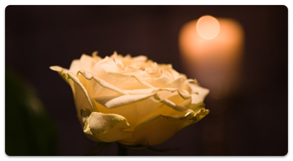 The beauty of candlelight and the fragrance of roses